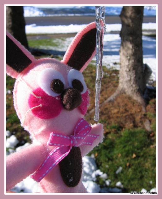 Ralphie the bunny near an icicle