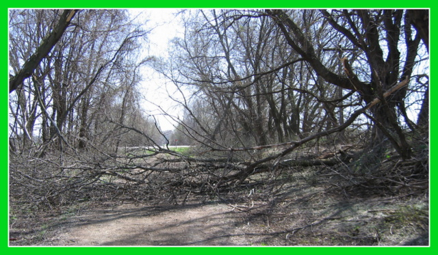 Broken tree branches over the nature trail scenery